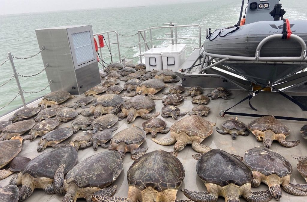 Le tartarughe al freddo e al gelo traslocano